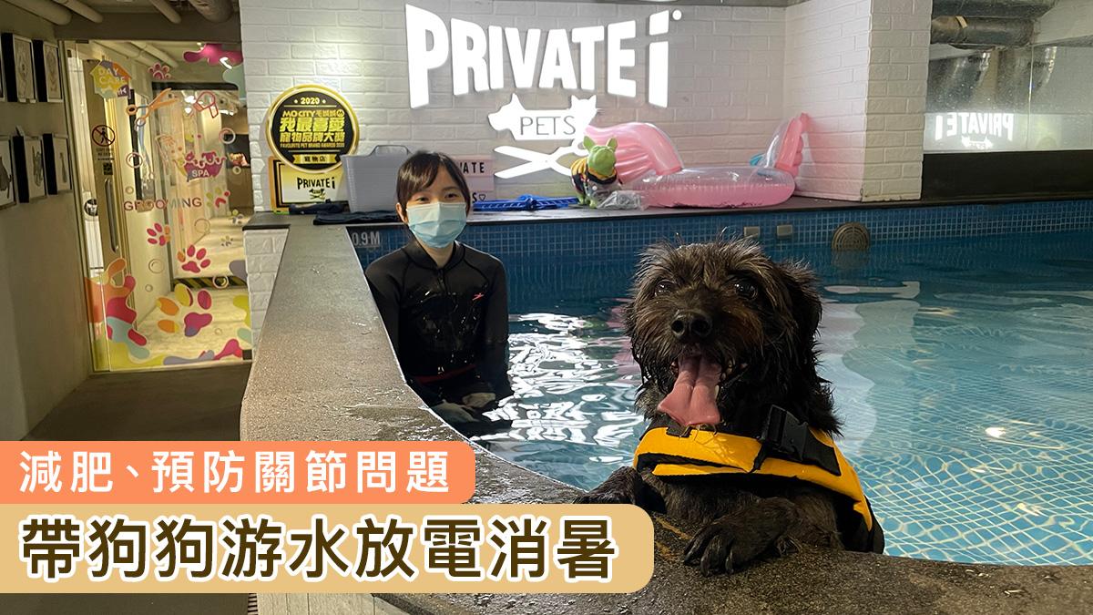 【防止中暑】帶狗狗游水放電 預防關節問題!