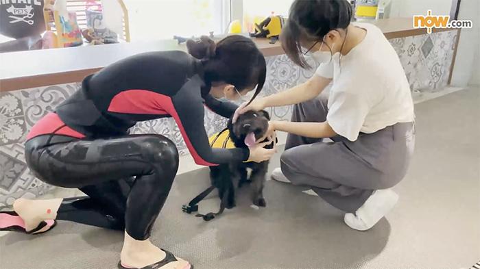 店舖會提供狗狗救生衣