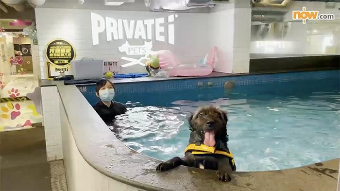 Pepper 游得好開心!