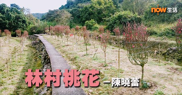 〈生活發現〉林村桃花-陳曉蕾