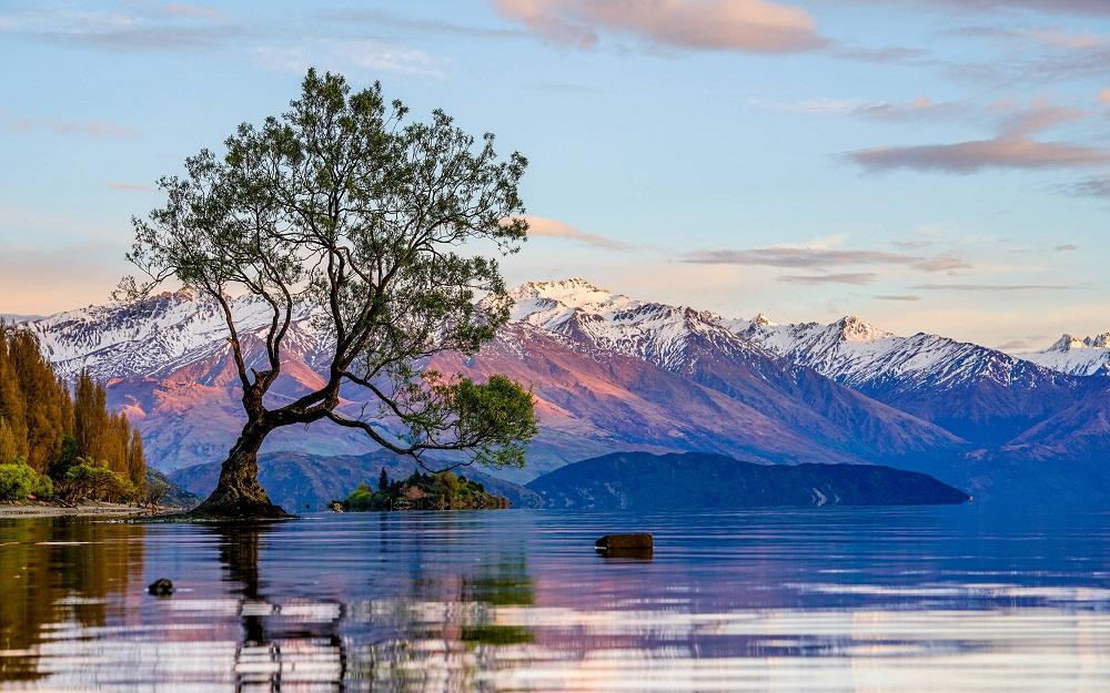遊客呃like爬樹影相 新西蘭WanakaTree重傷