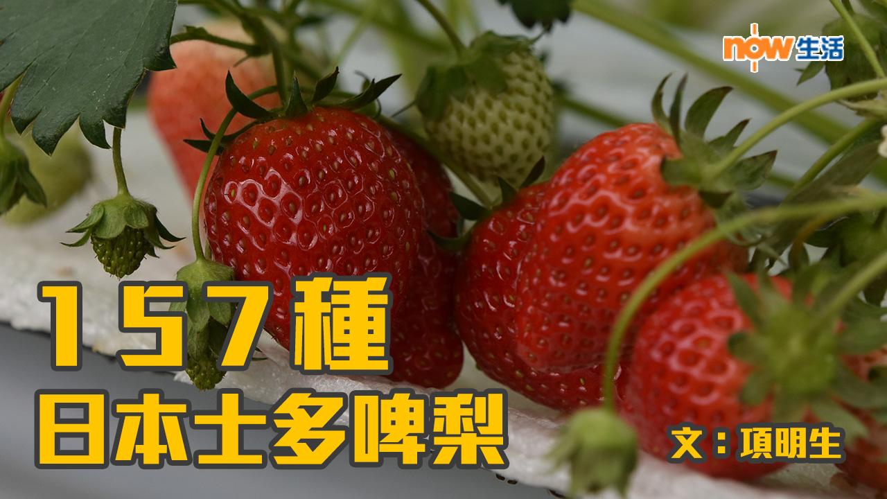 〈幸福就是旅行〉157種日本士多啤梨—項明生