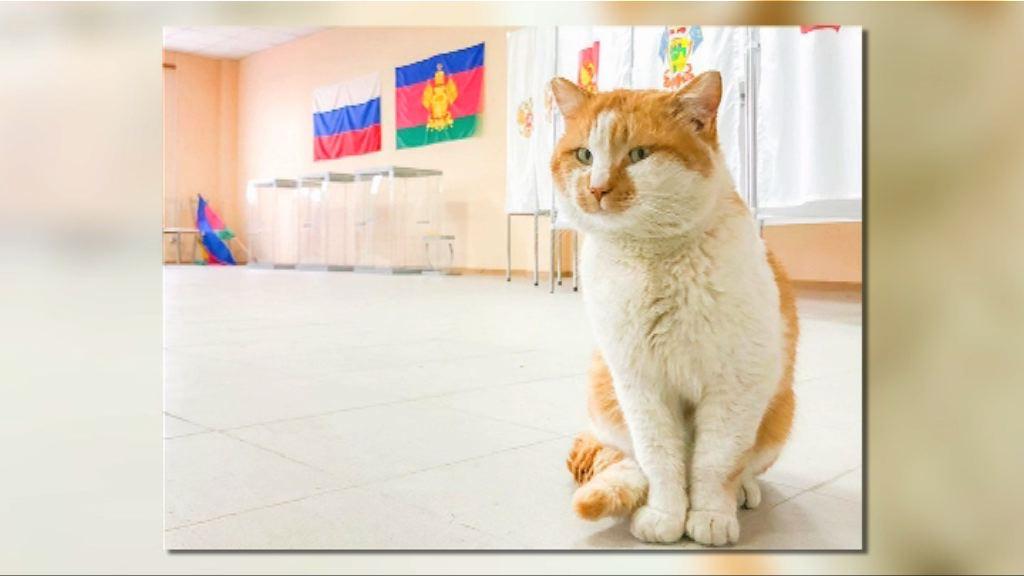 【環球薈報】克里米亞大橋吉祥貓視察票站