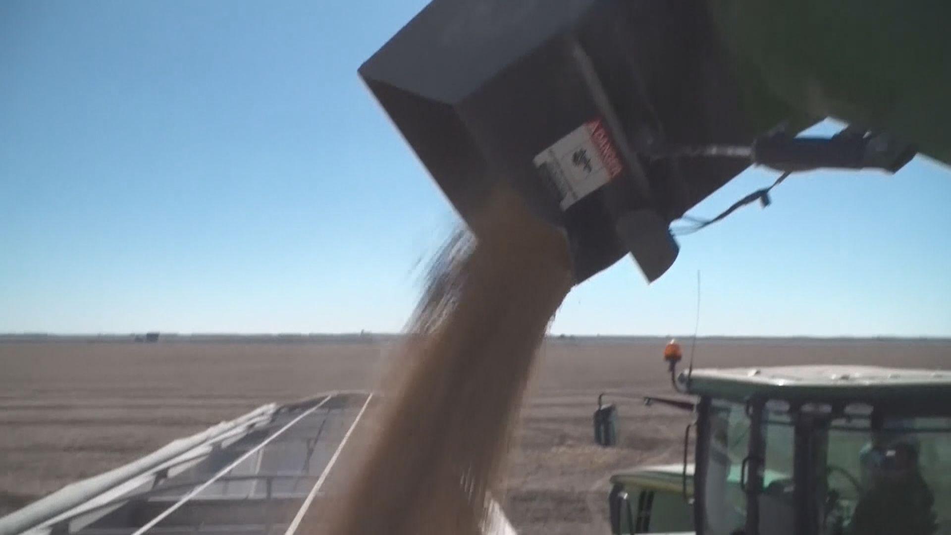 【貿易談判】高級別談判下周展開 中方採購60萬噸美國大豆