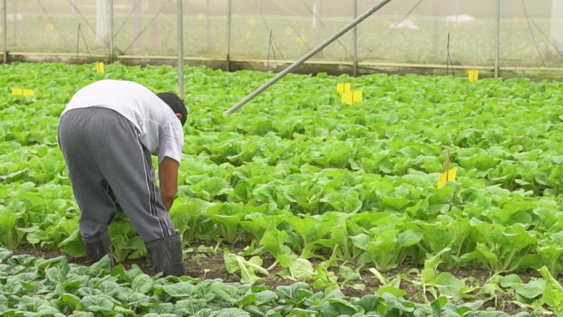 【灣區一分鐘】蔬菜和冰鮮禽肉供應靠惠州