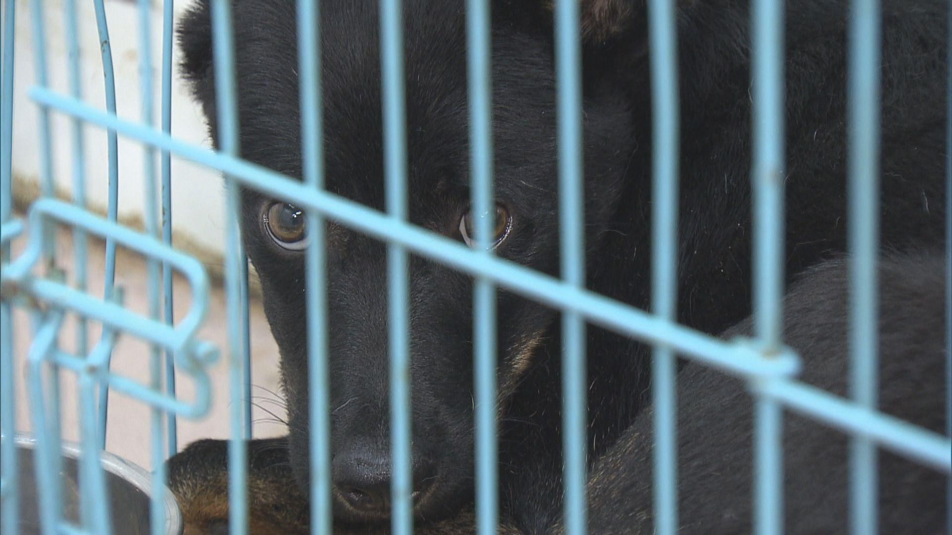 動保組織憂日後照顧流浪貓狗需負刑責