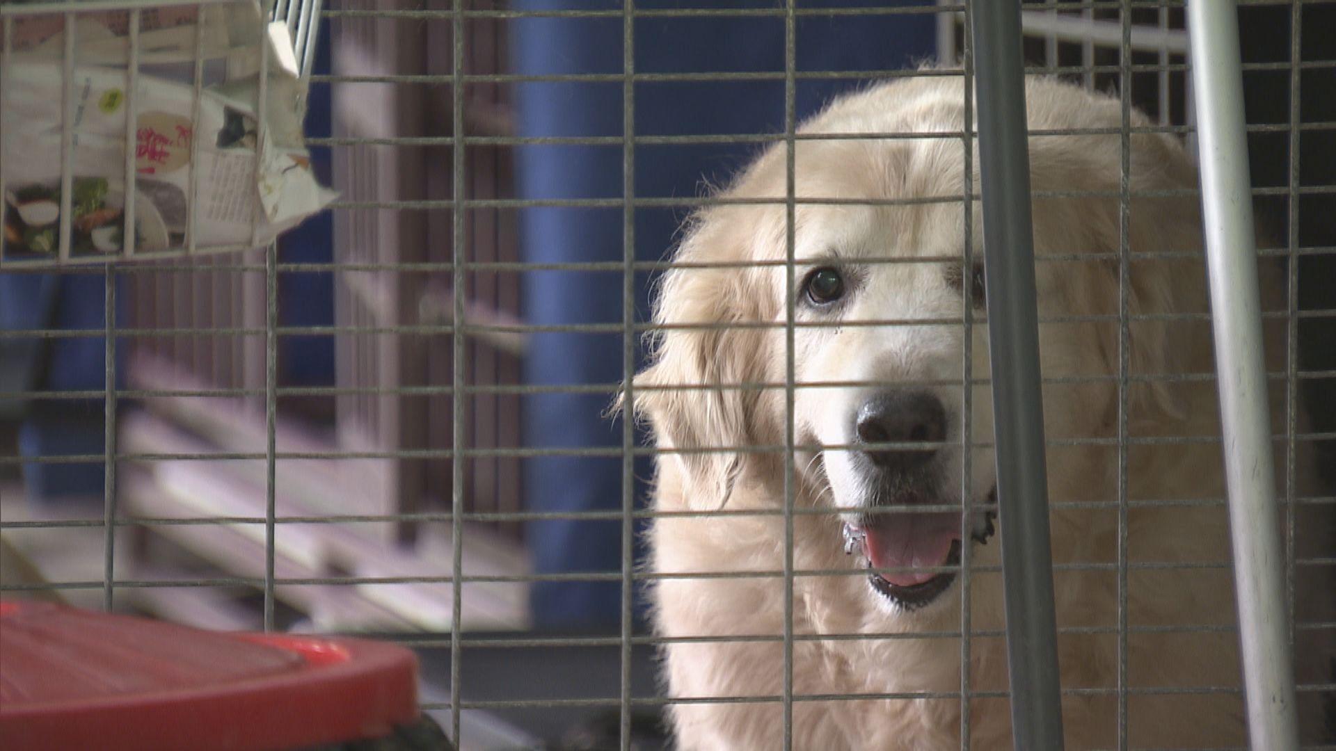 消息:政府擬訂《動物福利法》禁遺棄動物