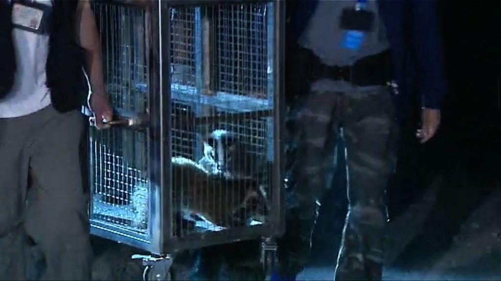 警方破瀕危動物養殖場 發現逾百隻動物
