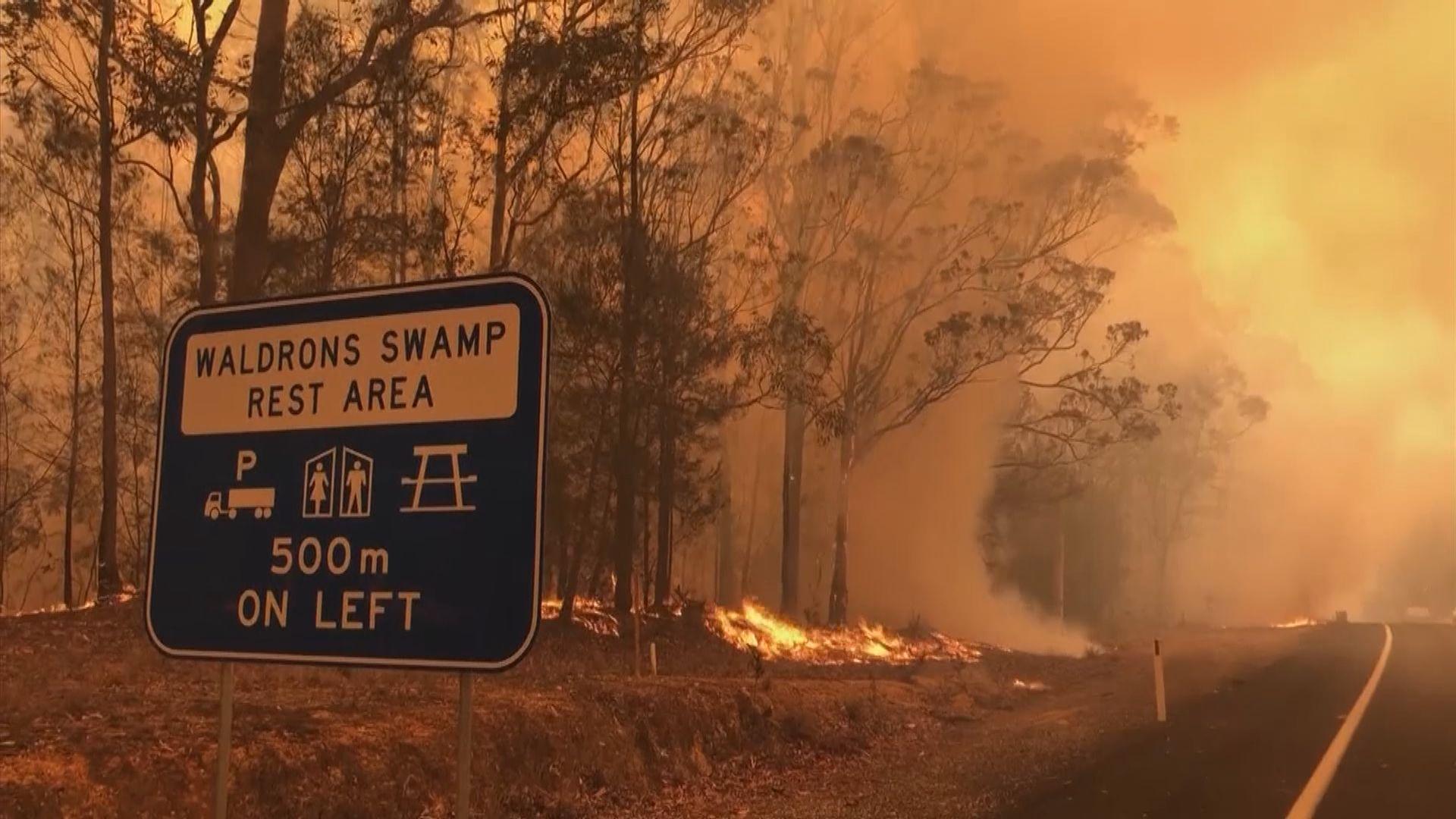 澳洲破天荒出動後備軍協助山火救援工作