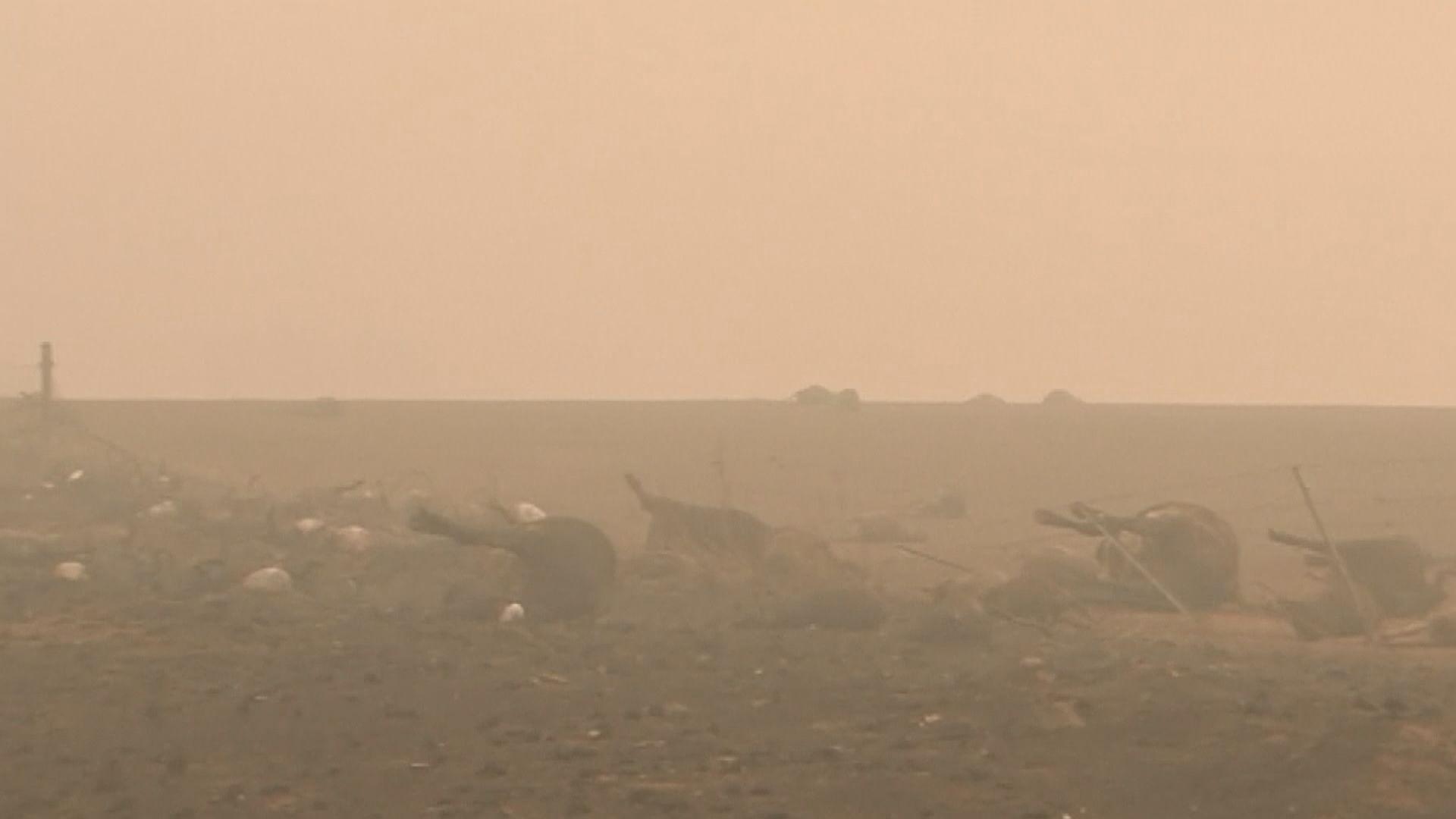 澳洲山火持續 專家估計新南威爾斯州近5億動物被燒死