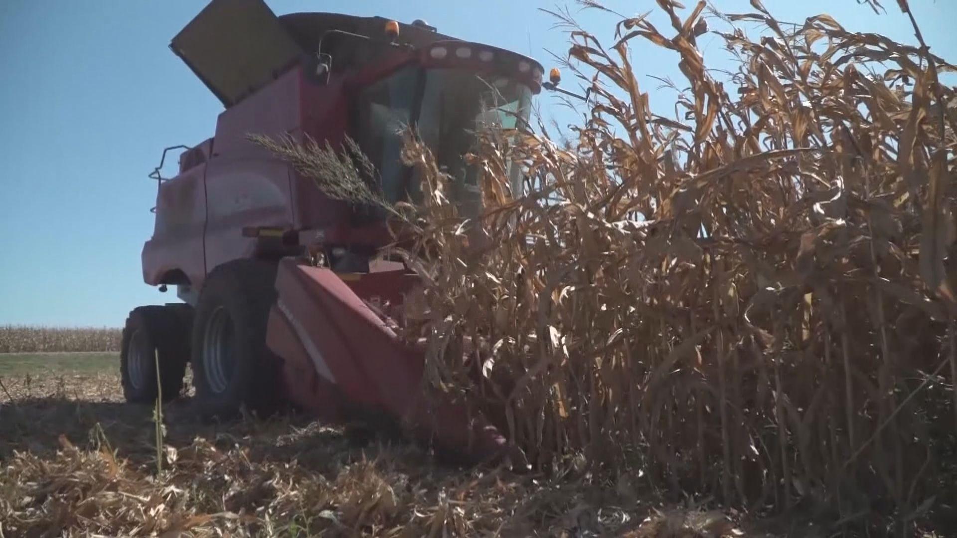 中國向澳洲進口大麥徵收反傾銷及補貼稅