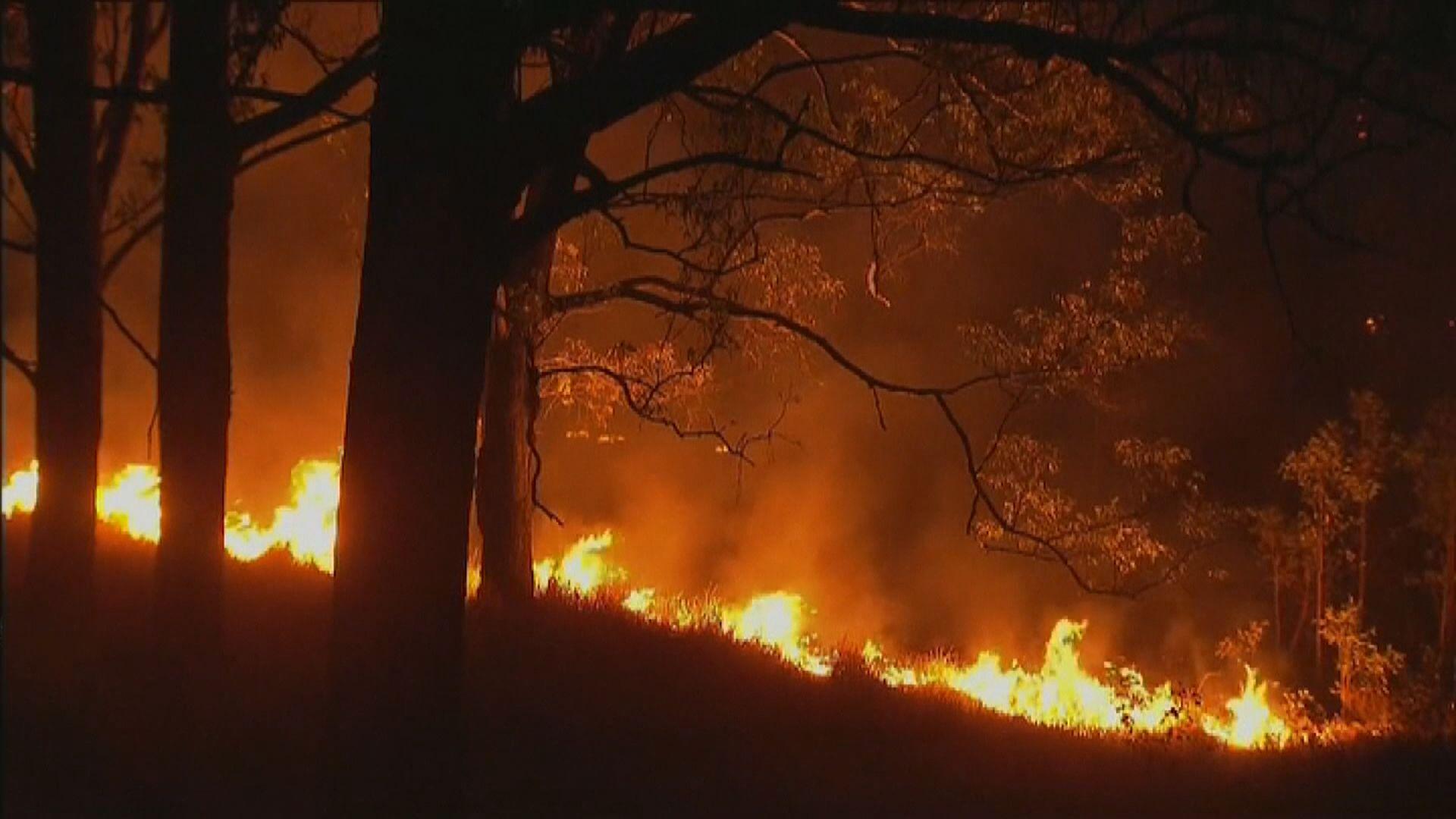 澳洲新南威爾士州山火持續13名消防員受傷