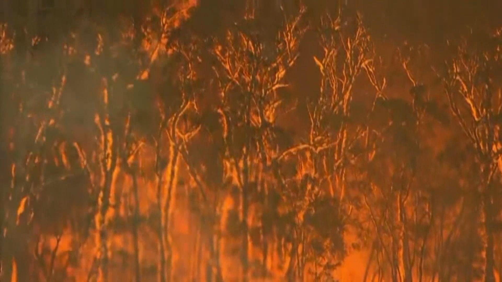 專家指澳洲一半山火涉及縱火或懷疑縱火