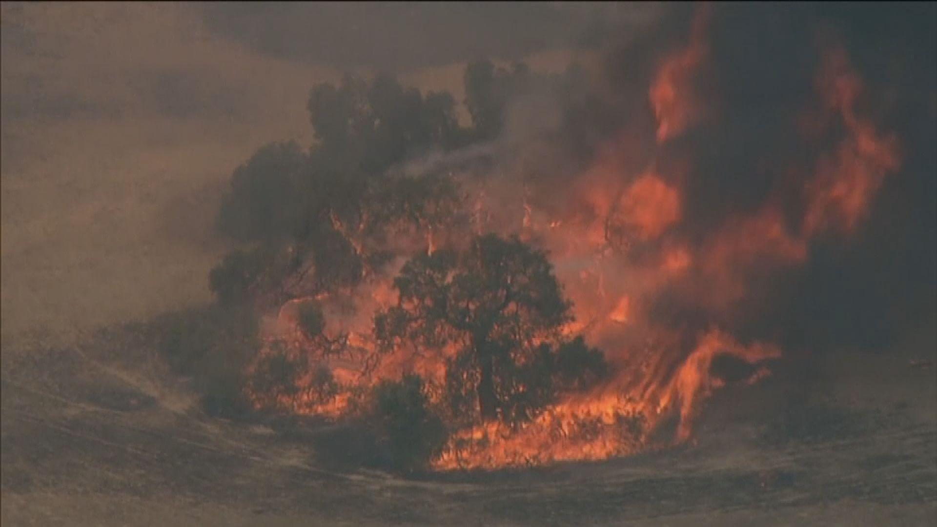 澳洲新南威爾士州山火仍未受控 大量房屋被焚毀