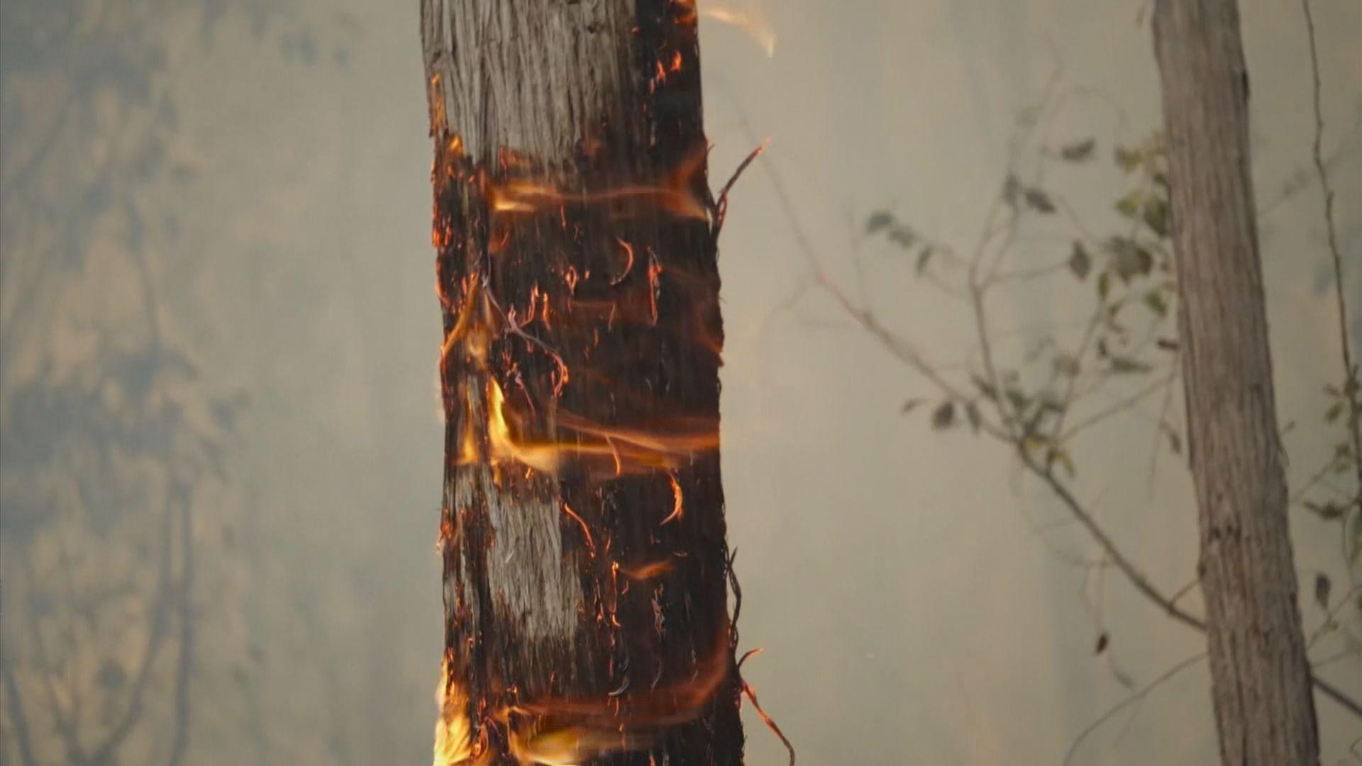 澳洲山火再有消防員殉職 總理首次承認處理不力