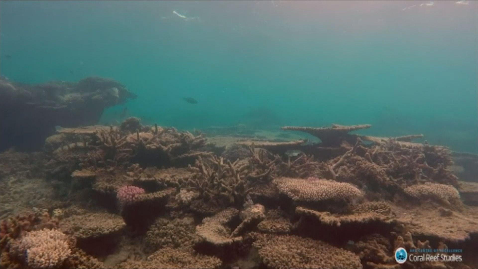 澳洲將大堡礁外貌下調至最低評級