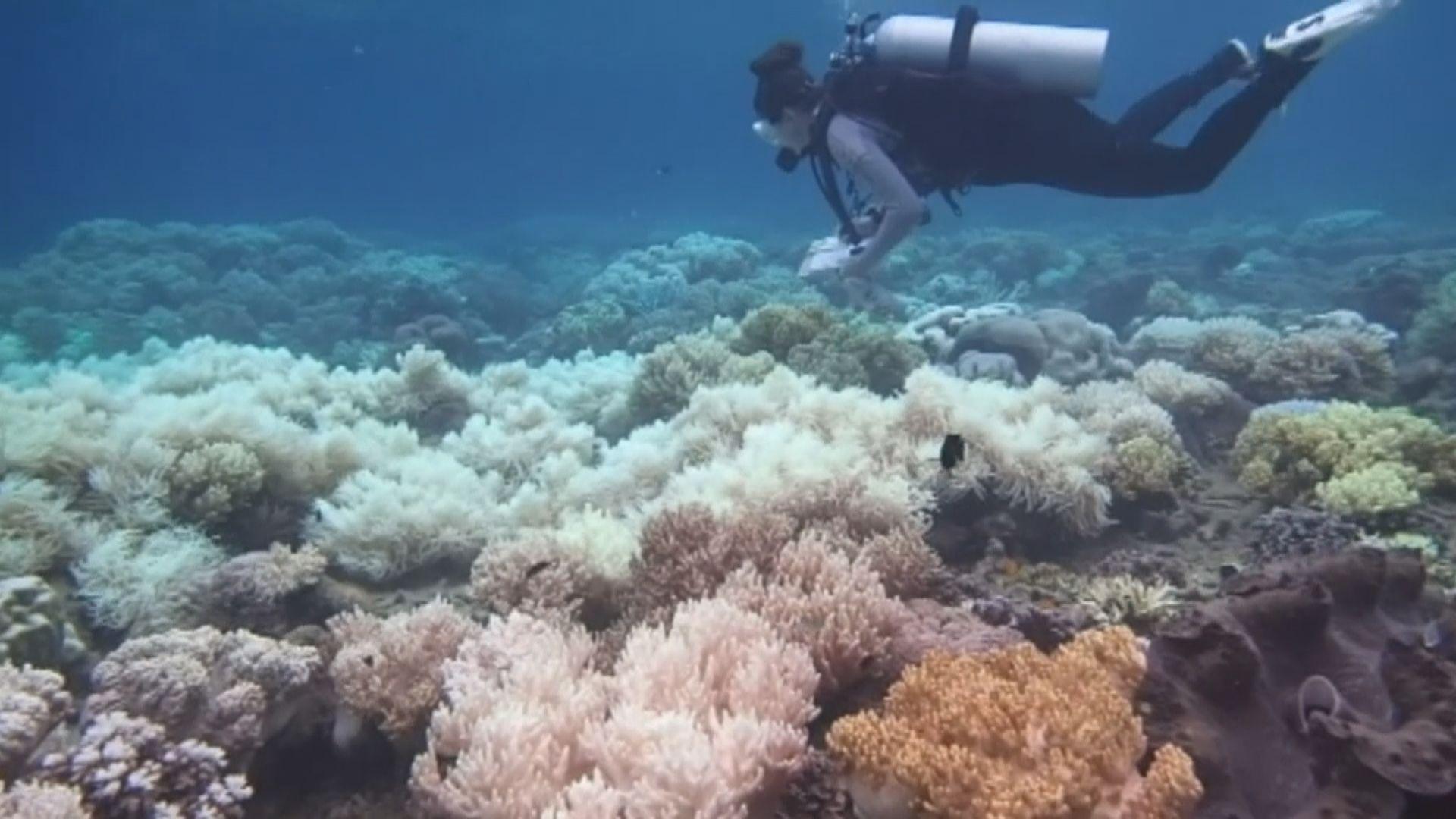 珊瑚白化引致海洋生態混亂