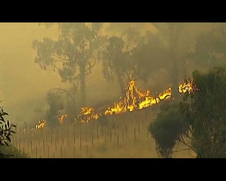澳洲山火失控多處進入緊急狀態