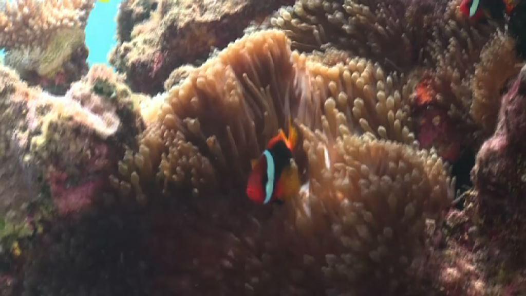 澳洲擬撥五億澳元保護大堡礁