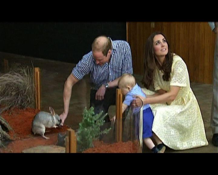 威廉伉儷與喬治參觀澳洲動物園