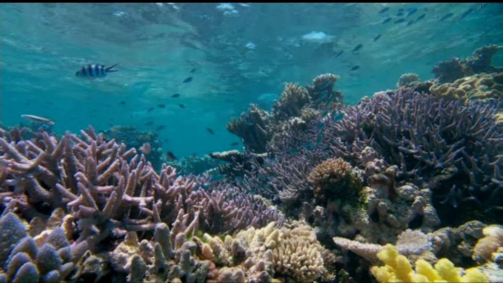 大堡礁考察團獲資助研究「超級珊瑚」