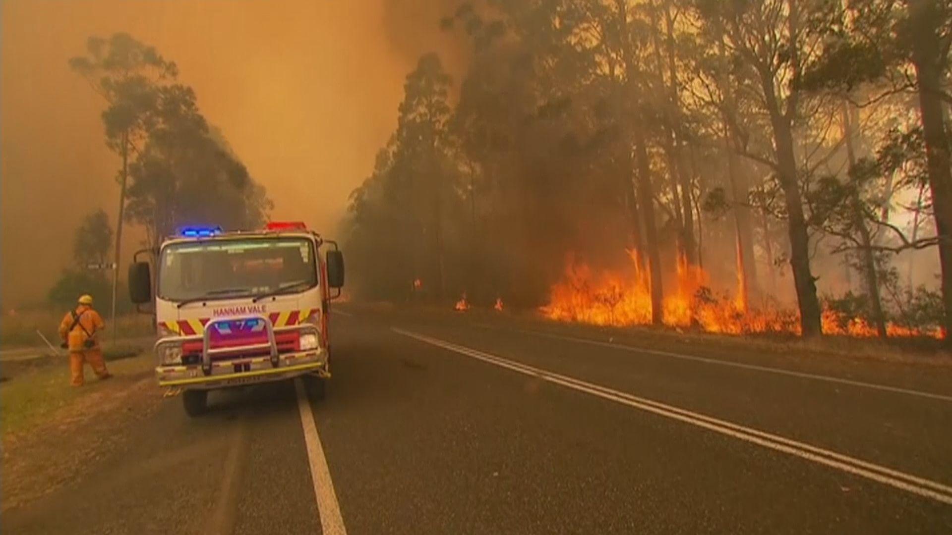 澳洲東岸山火肆虐 兩州宣布進入緊急狀態