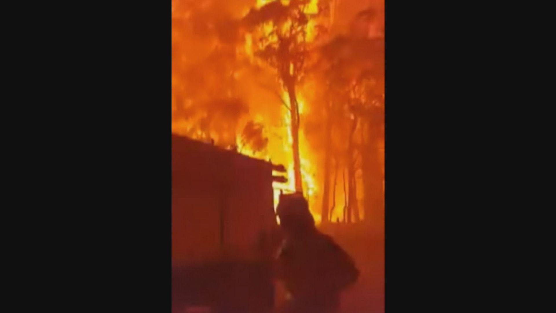 澳洲新南威爾士州山火過百火頭未受控