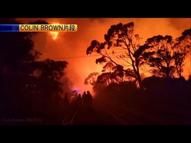 悉尼藍山山火未受控居民要撤離