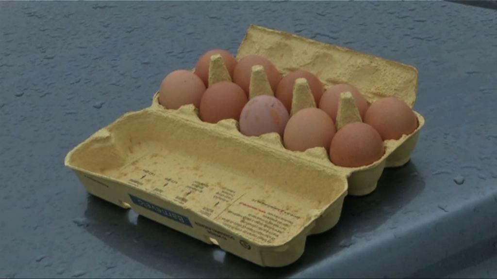 荷蘭被指大半年前已知悉毒雞蛋
