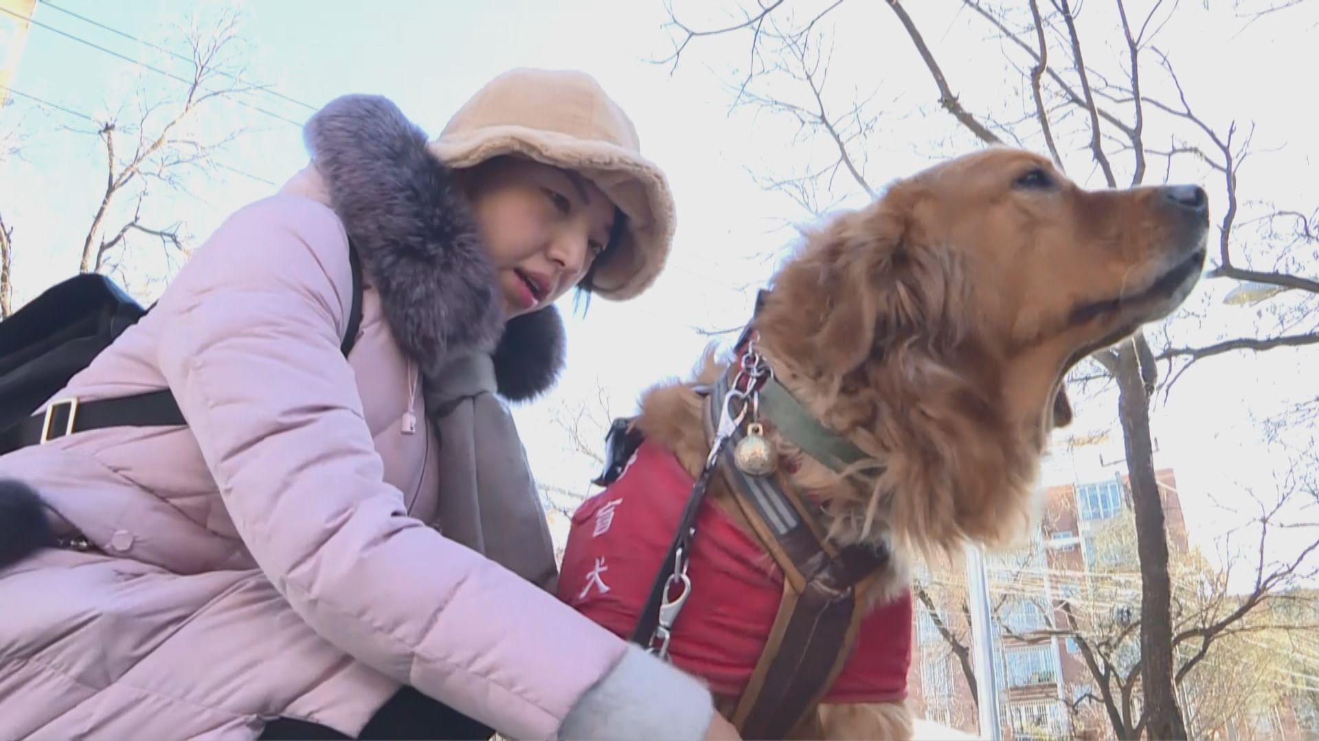 【首都專線】北京導盲犬出行受阻待提高認知