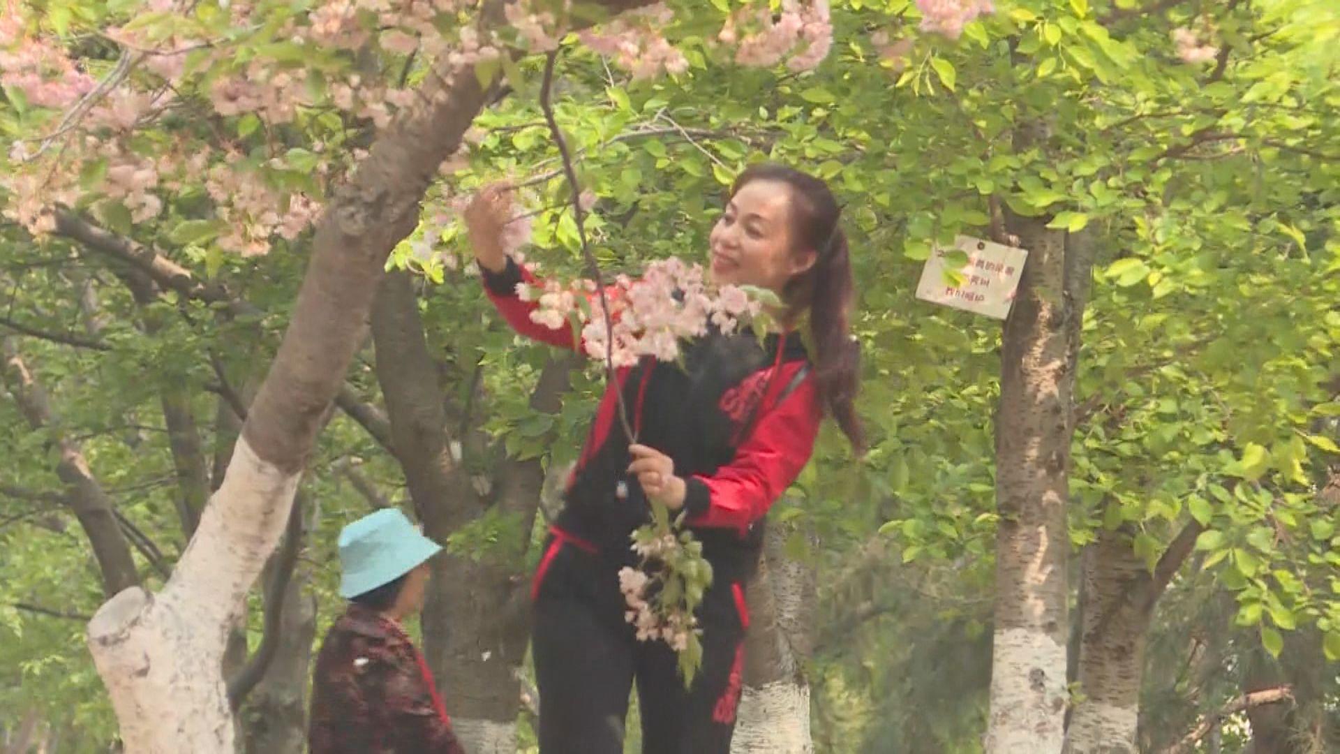 【首都專線】賞花變摧花 當局擬定遊園黑名單