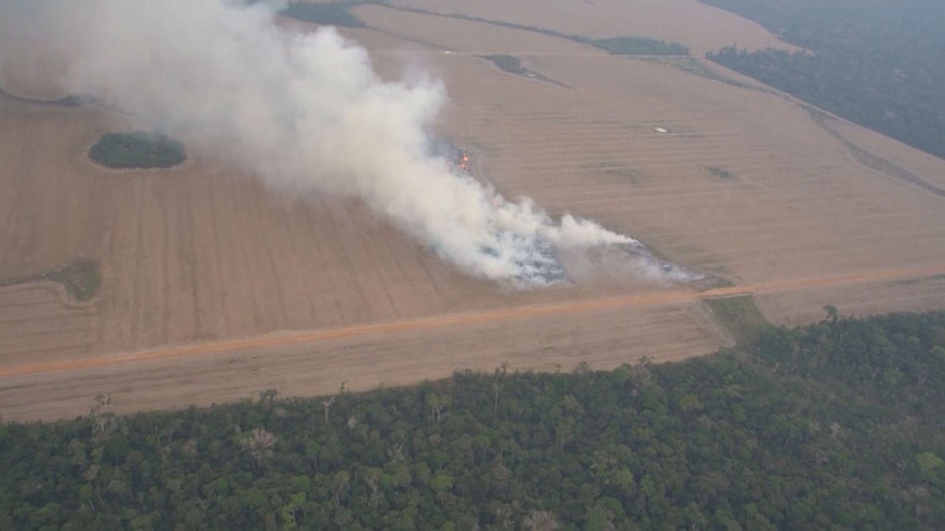 巴西禁止大部分焚林墾地活動六十天