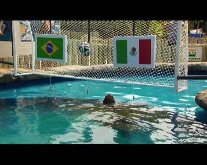 巴西海龜預測國家隊不敵墨西哥