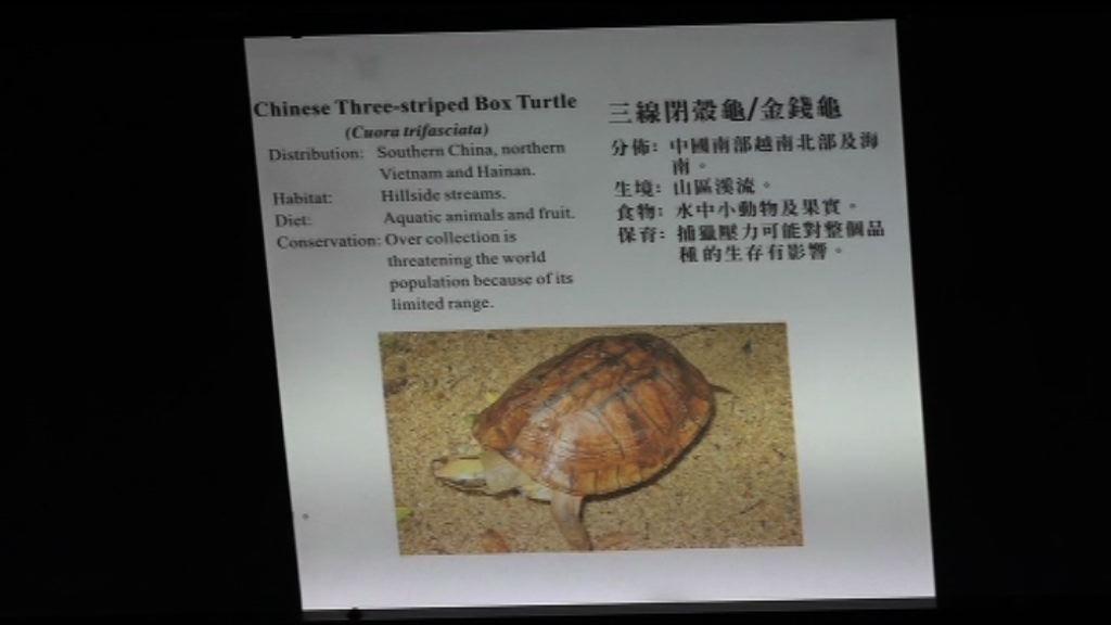 屯門公園爬蟲館被偷去金錢龜