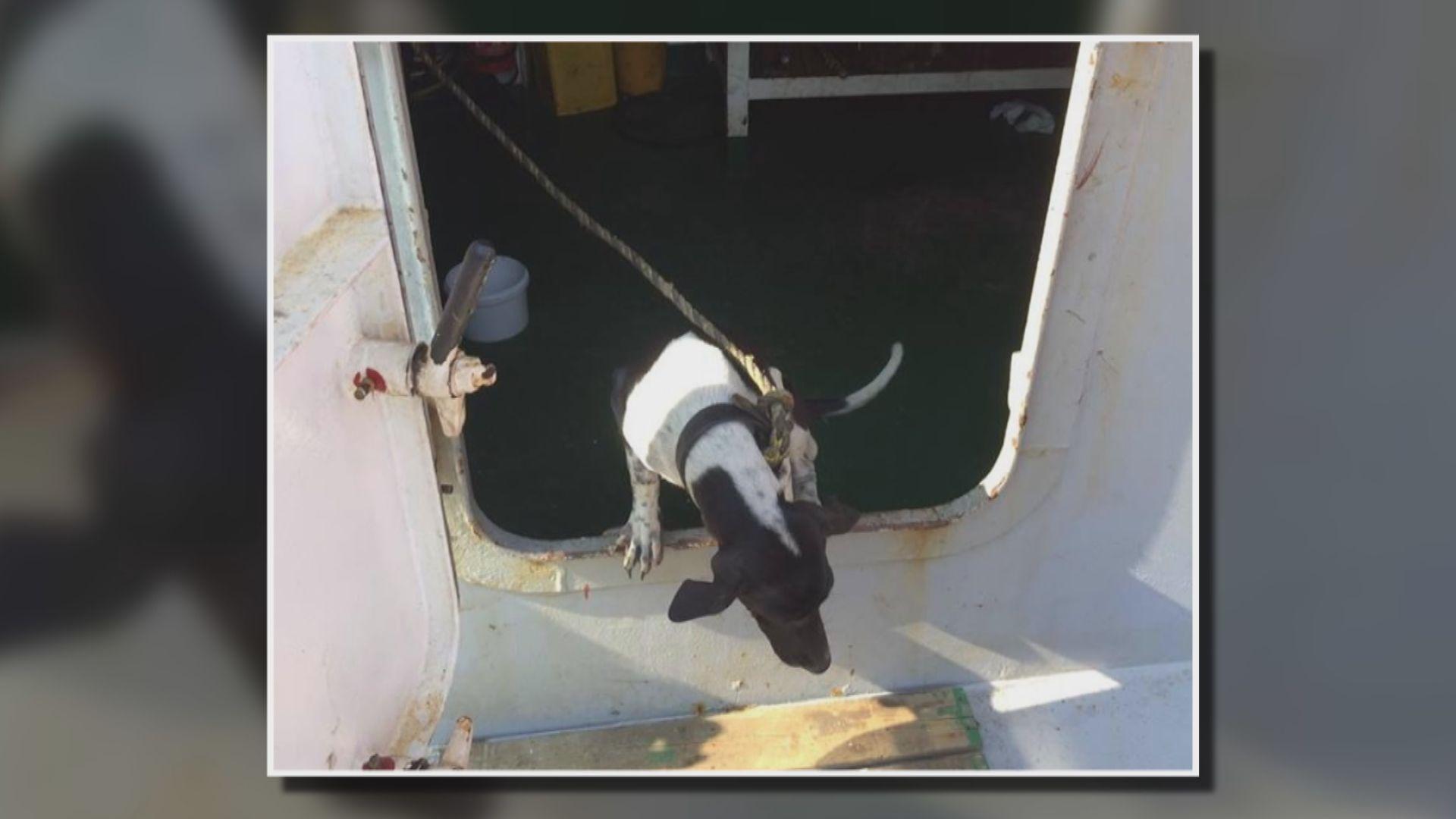 漁護署將與代理人跟進狗隻屍體後續處理