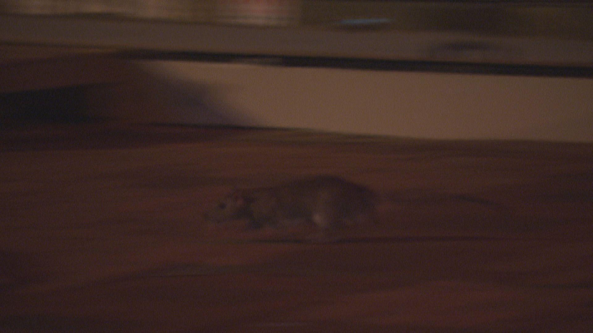 陳肇始:會物色新科技協助滅鼠