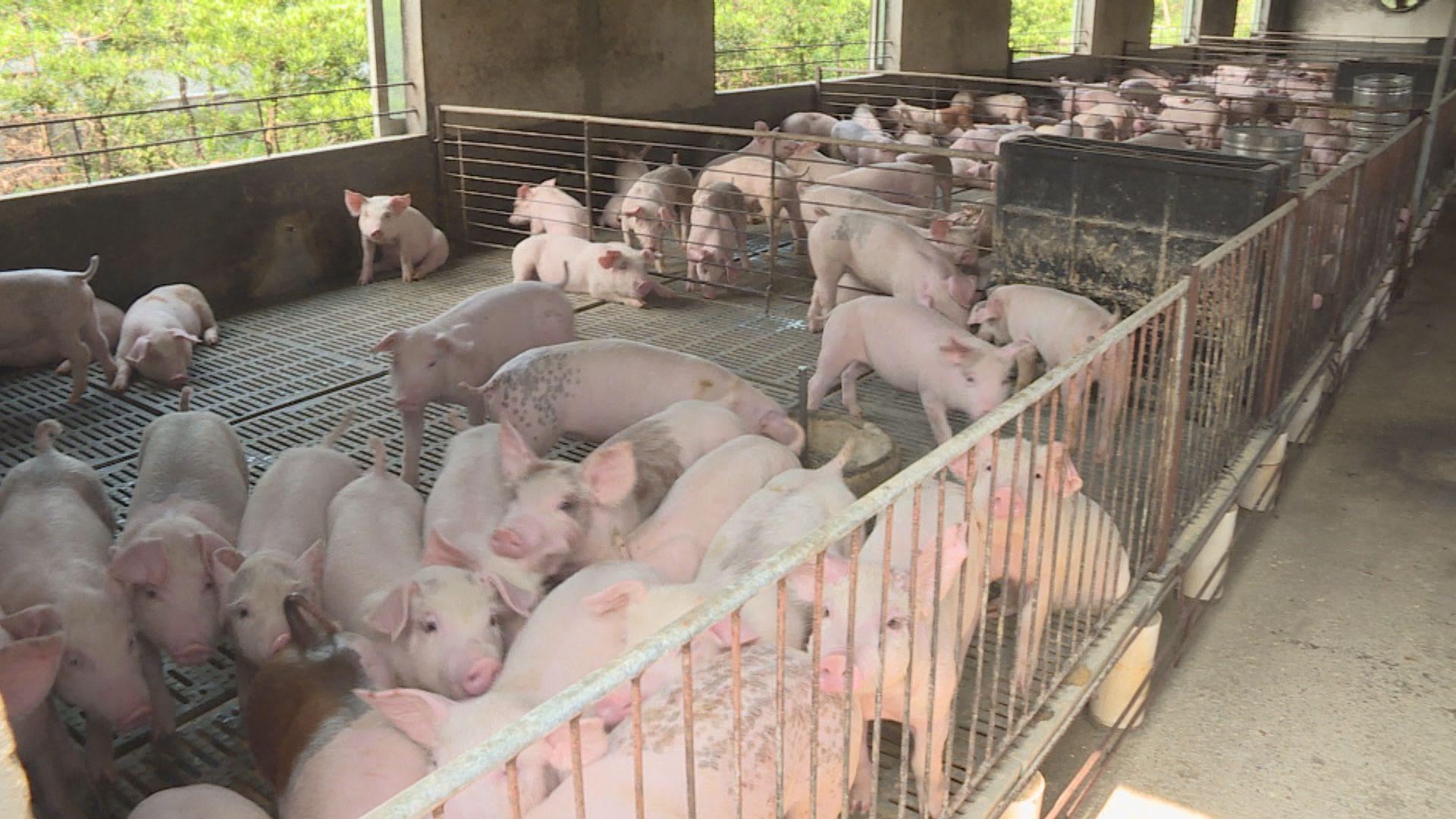 內地再投放一萬噸儲備豬肉
