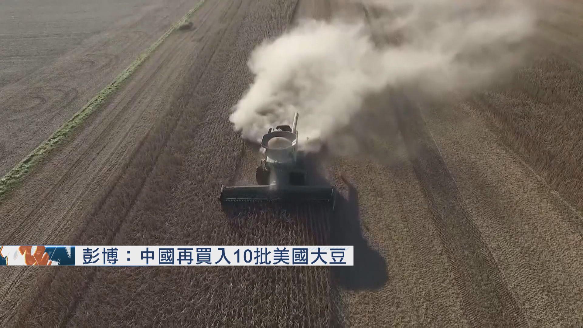 彭博:中國再買入10批美國大豆