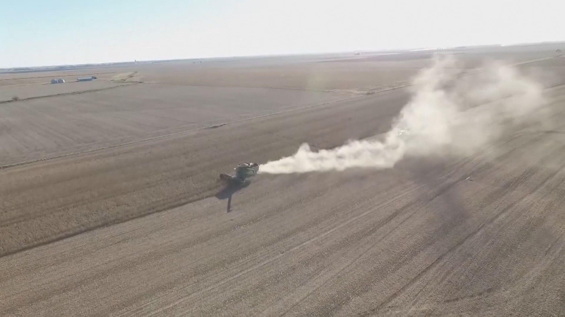 中國再度採購美國大豆