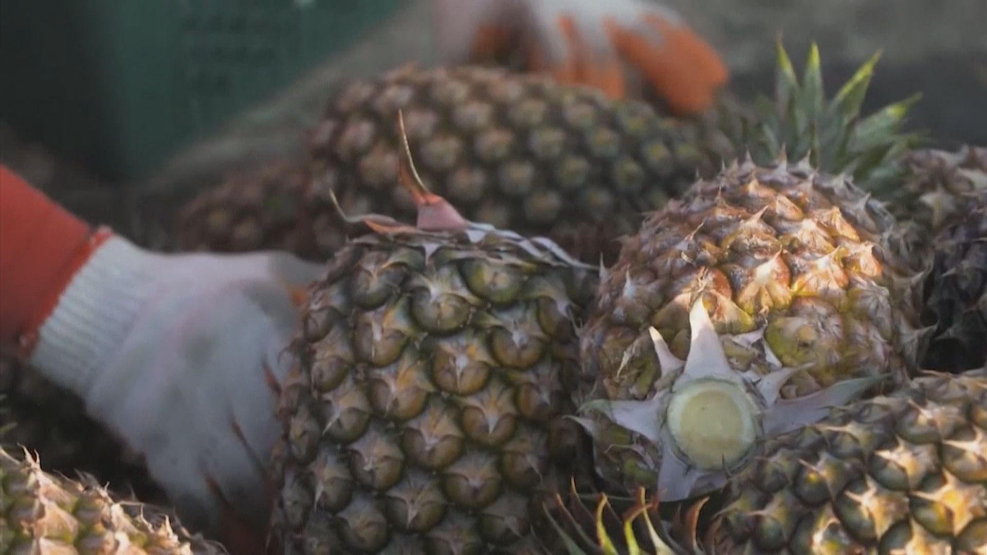 國台辦:民進黨將禁止進口菠蘿問題政治化
