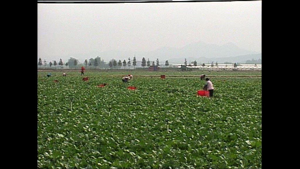 一號文件提出深入推進農業供給側改革