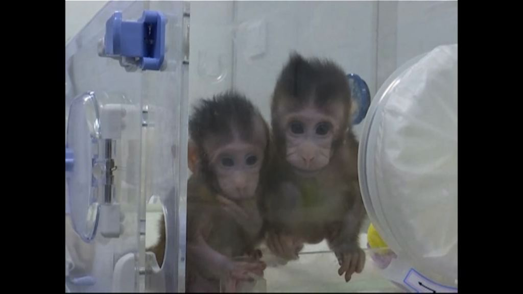 中國突破複製技術成功複製猴子