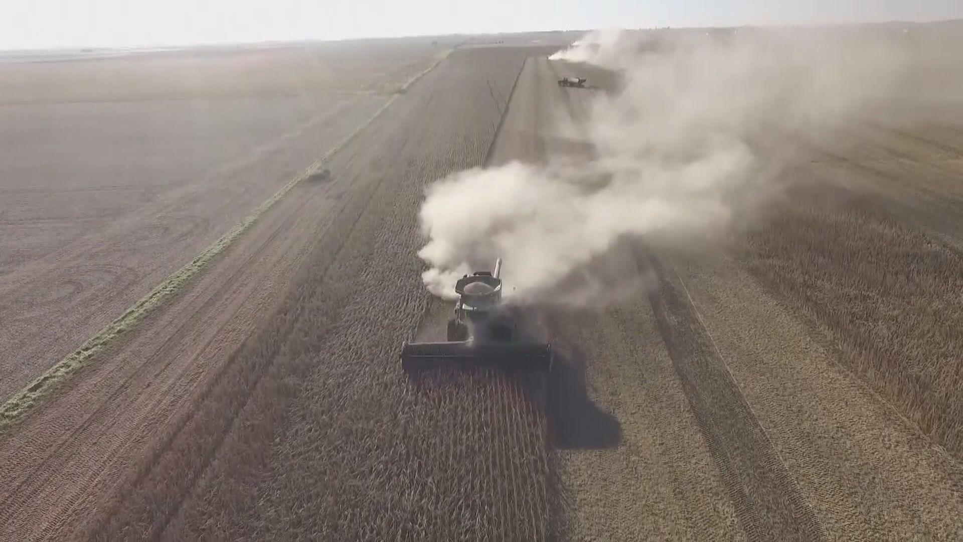 中國恢復採購美國高粱惟同時取消美國大豆進口