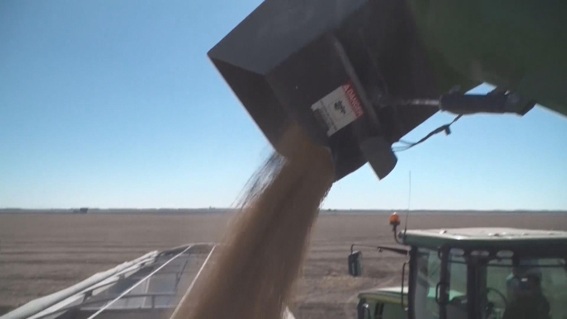 路透:中進口商本周購7艘貨船量的美大豆