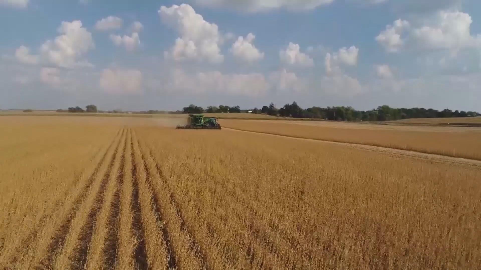 中美農產品爭議 世貿判美國勝訴