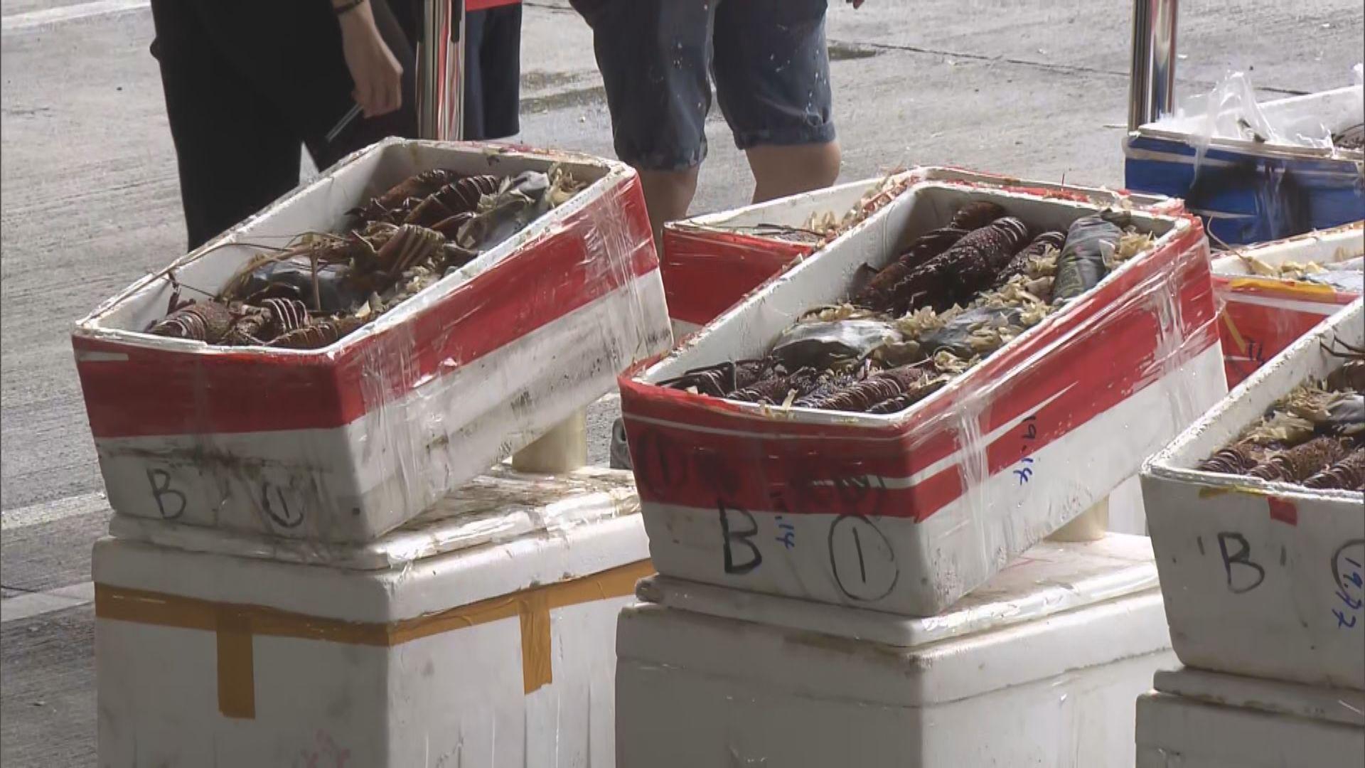 海關與內地當局反走私行動 檢獲澳洲龍蝦市值逾四百萬