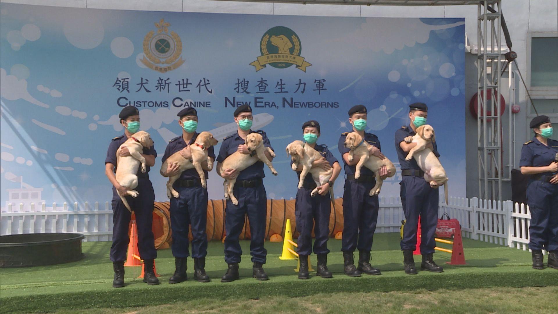 海關首次自行繁殖工作犬 最快明年引入槍械搜查犬