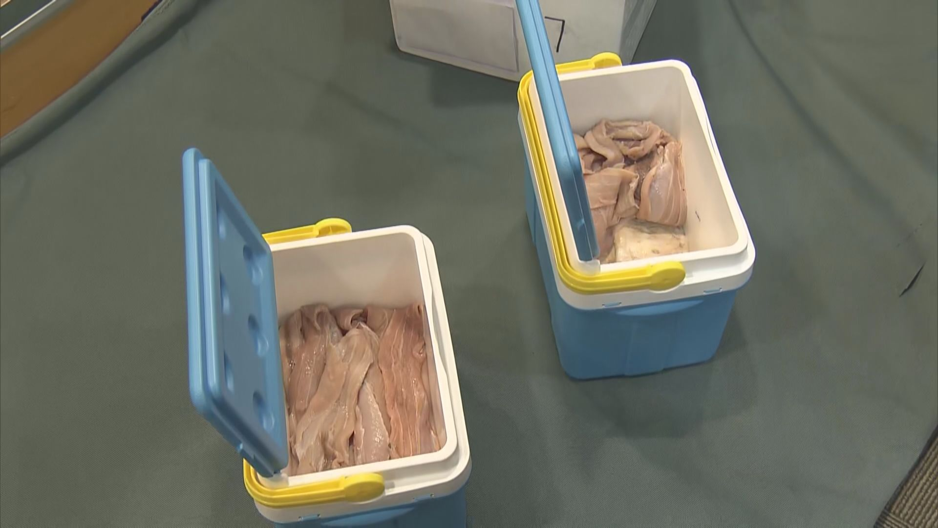 海關檢獲走私石首魚魚肚 市值約2500萬元