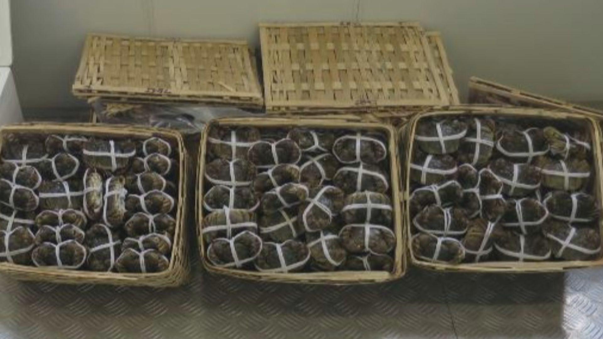 海關食環署檢獲逾300隻疑走私大閘蟹