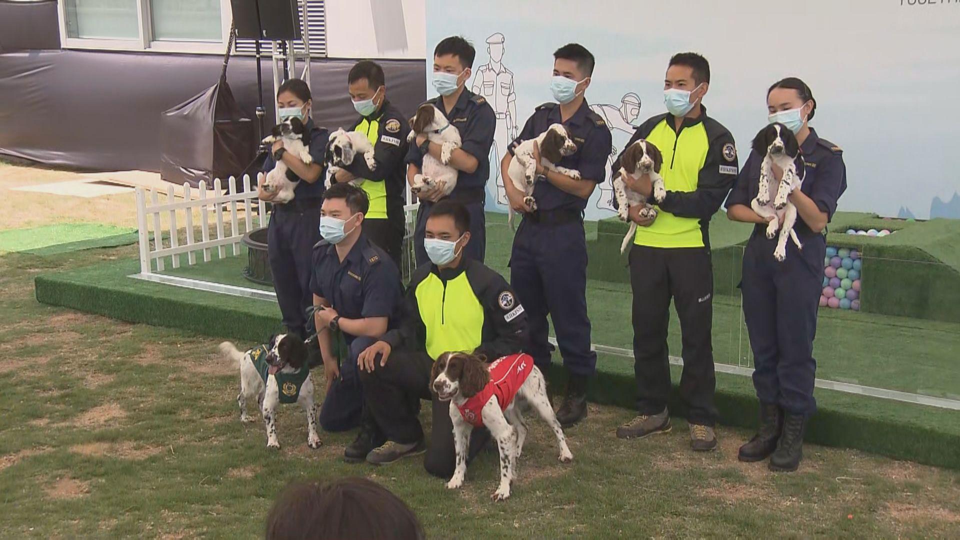 海關和消防處首次合作繁殖工作犬